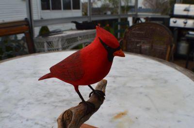 cardinal sculpté 1